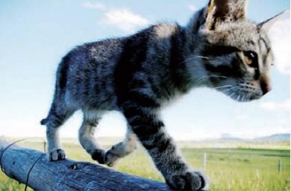 捕捉动物喜怒哀乐 动物与生态实拍技法