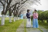 四月樱花映佳人 中国摄影