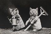 拟人化宠物摄影 一百年前
